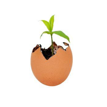 Birth of new life growth