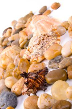 sea shells and pebble