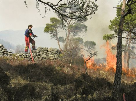 Firefighter fighting tryes to put out a fire back in  2004. The forrest caught fire when some kids played with open fire in dry nature. The fir was put out before it reached buildings nearby! Place: Ytre Arna in Bergen city of Norway!