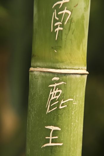 Chinese symbols carved in the bamboo