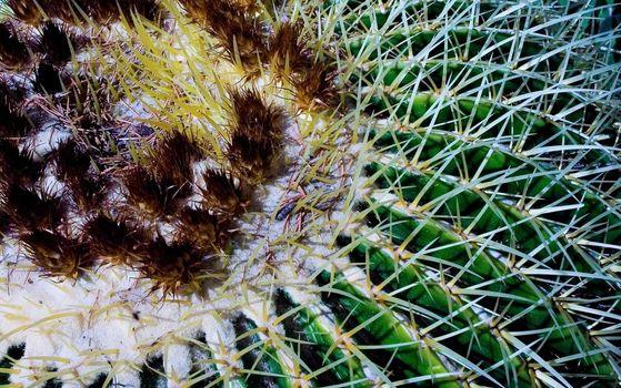 Cactus closely