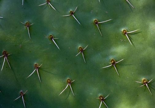Background cactus texture