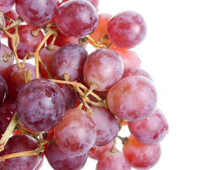 Merlot Grapes on Vine in Vineyard Close-up