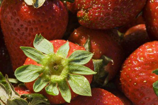 Strawberrys  background
