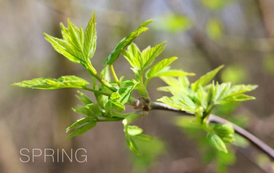Green spring tree leaves on natural background
