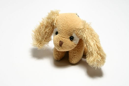 small toy dog on white
