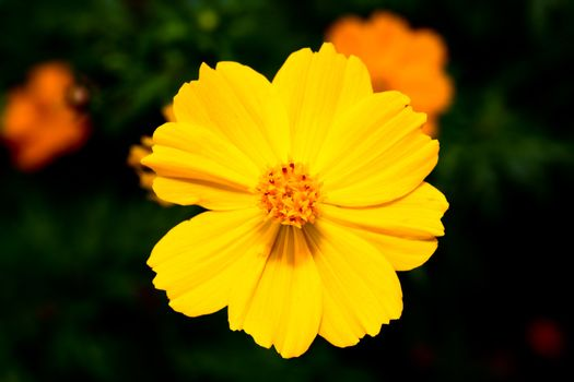 Flowers at a botanic garden