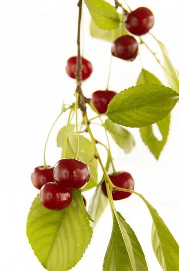 Red cherry with leaf on white background