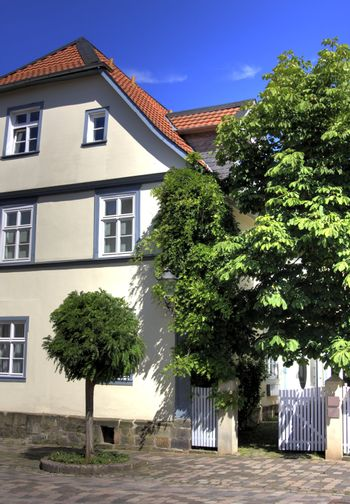 baroque house and chestnut tree