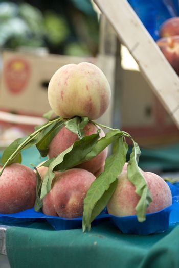 Basket of tabacchiera peaches