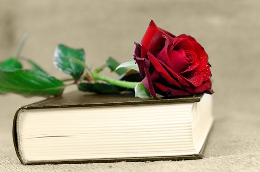 a book covered with a red rose