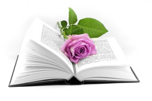 a rose placed in an open book