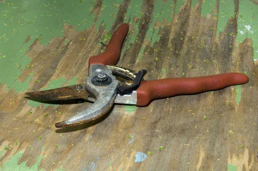 rusty garden shears