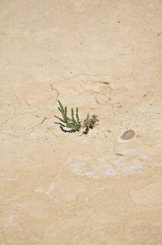 plant on drought soil
