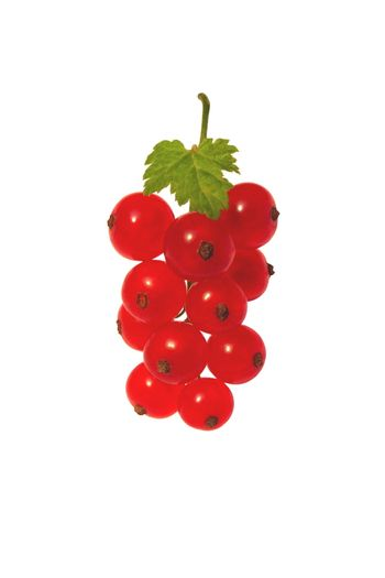 Berries of a red currant on a branch