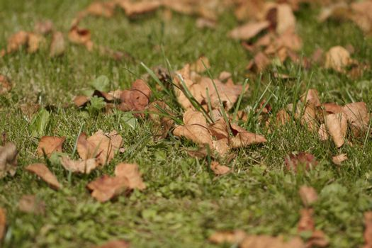 Autumn leaves on ground. Close up image