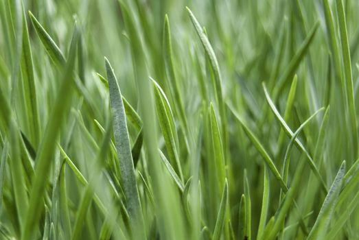 grass from my backyard