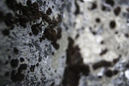 moss on a rock in romania