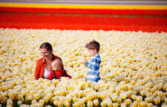 In tulip field