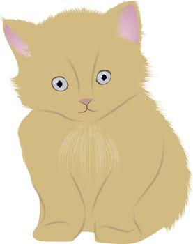 very nice beautiful kitten with blue eyes