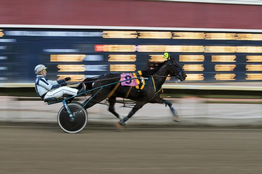 A race horse speeds to the finish at Calgary Stampede Park