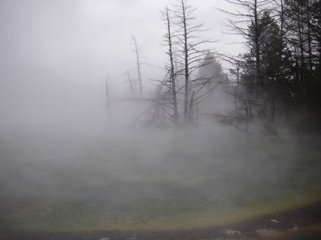 Steaming Geyser on a cold day