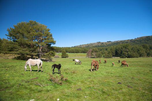 family of horses grazing