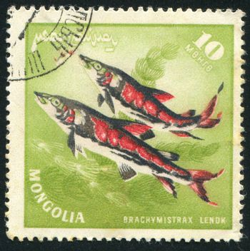 MONGOLIA - CIRCA 1965: stamp printed by Mongolia, shows Lenok trout, circa 1965.