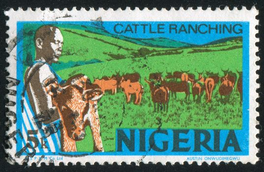 NIGERIA - CIRCA 1973: stamp printed by Nigeria, shows Cattle ranching, circa 1973