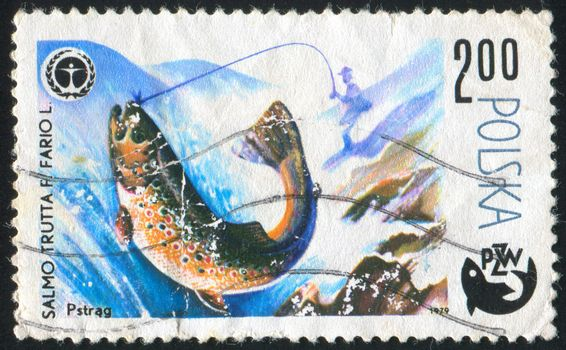 POLAND - CIRCA 1979: stamp printed by Poland, shows fish, circa 1979.