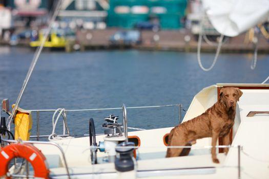 Dog on yacht