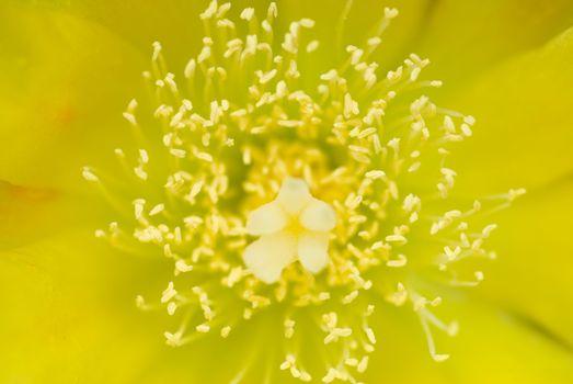 Flower, Pistil and stamen