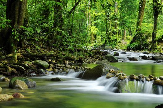 Mountain stream in a tropical rain forest.