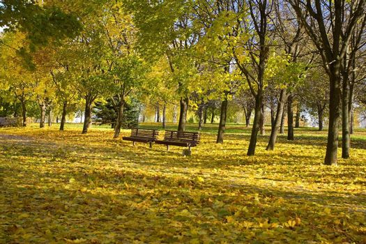 leaf fall in autumn park