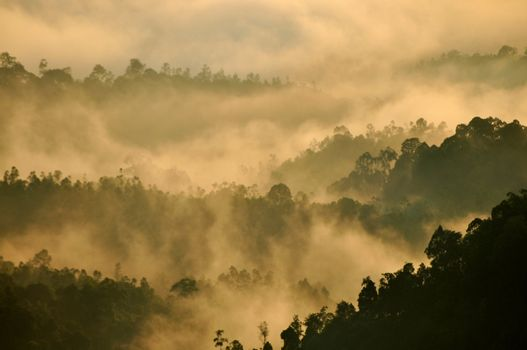 Tropical Mountain Range