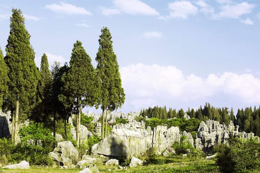mystery stone forest