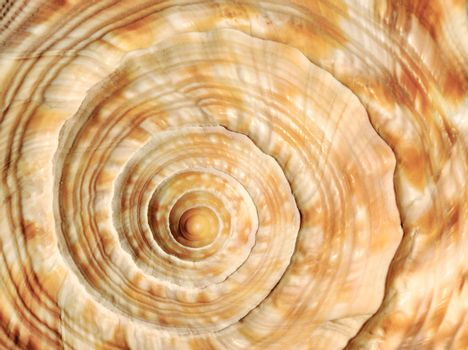 Spiral on sea shell