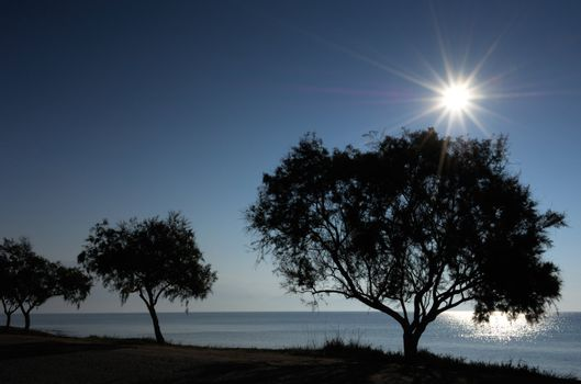 Backlit trees on the shore