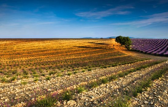 Early morning in Provence