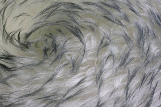 fur background - Australian lambskin macro with a vortex pattern