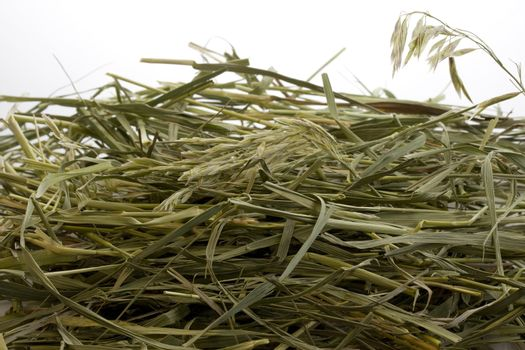 grass hay against white background with a copy space