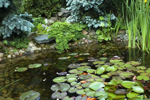 peaceful garden. nenuphar