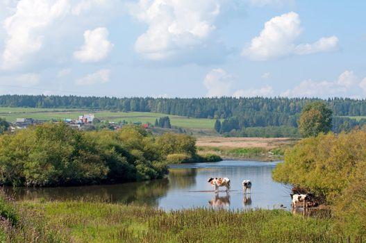 Village landscape with cows