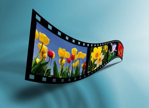 Filmstrip of flowers