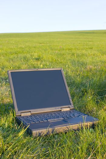 Laptop lying in green grass of a meadow