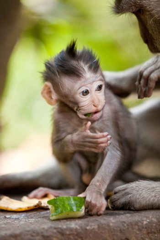 Cute little baby monkey