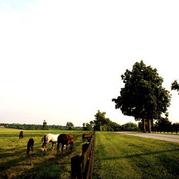 Kentucky Thoroughbreds