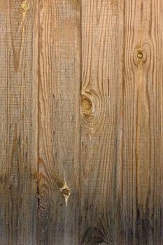 Pinewood texture