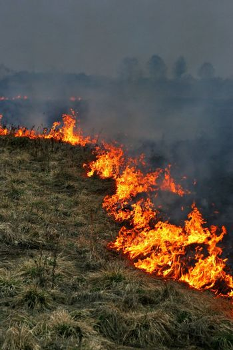 Fire. Burning grass in spring