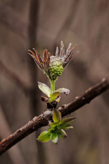 First leaves of spring